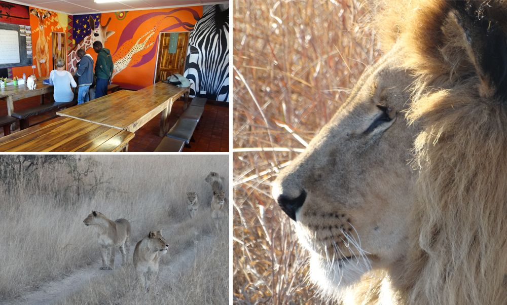 African Lion and Environmental Research Trust (ALERT)